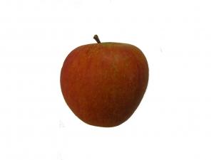 Cox Orange Apfel