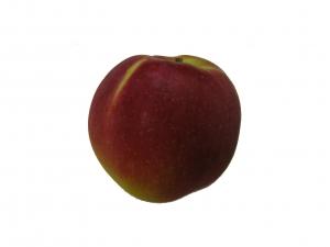 Mc Intosch Apfel